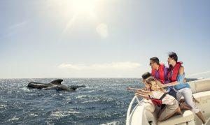 Visit La Palma: Avista … cetáceos en La Palma