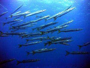 Visit La Palma: Descubre … La Palma bajo el mar en La Palma