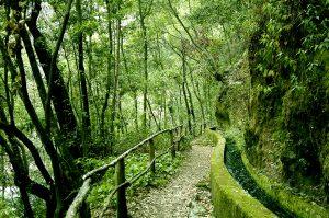 Visit La Palma: Parque Natural de las Nieves – Bosque de los Tilos en La Palma