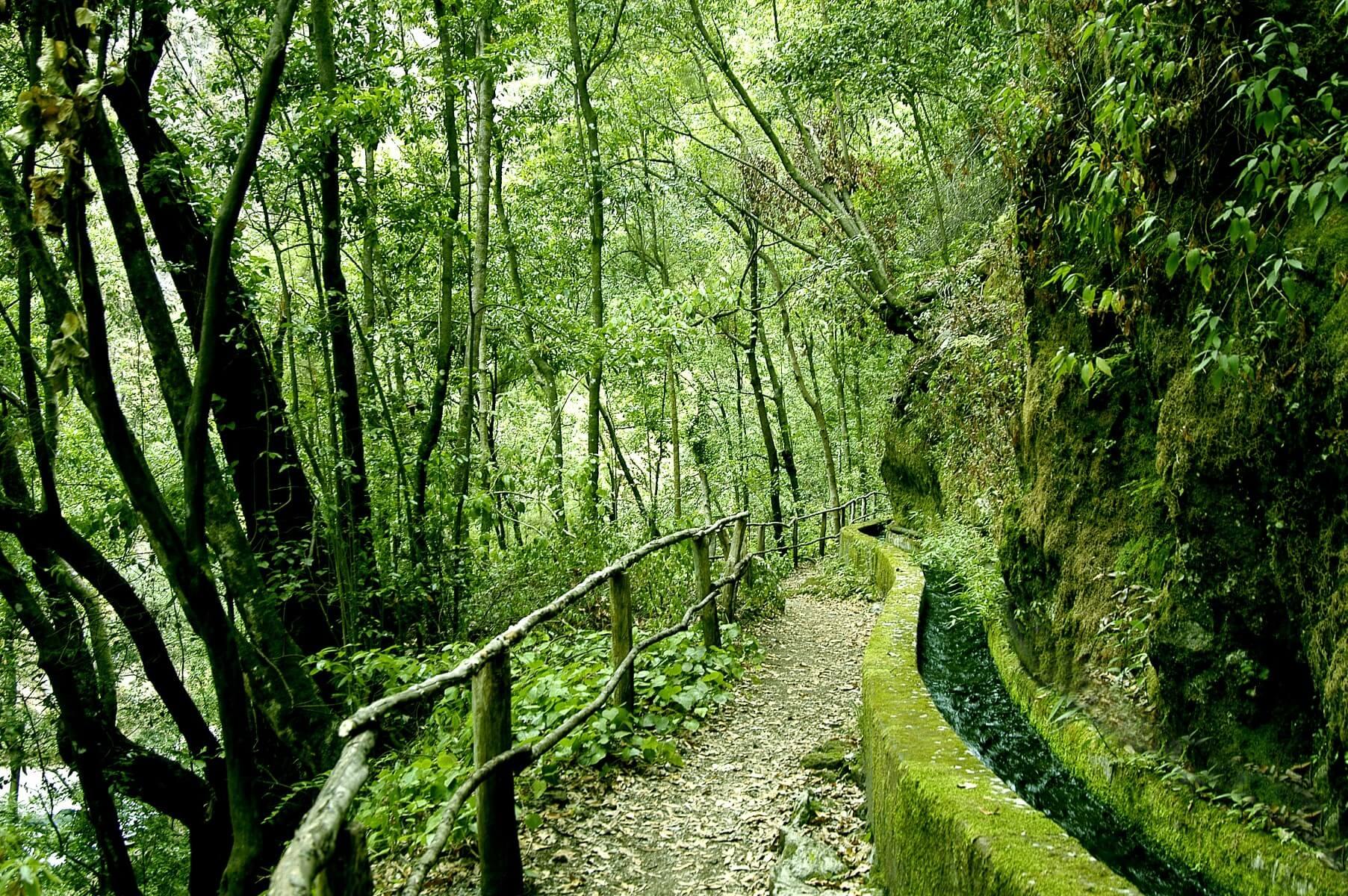 Resultado de imagen de El Parque Natural de Las Nieves la Palma
