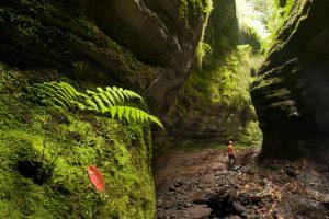 Visit La Palma: Parque Natural de las Nieves – Cubo de la Galga (Punto de Información Ambiental) en La Palma