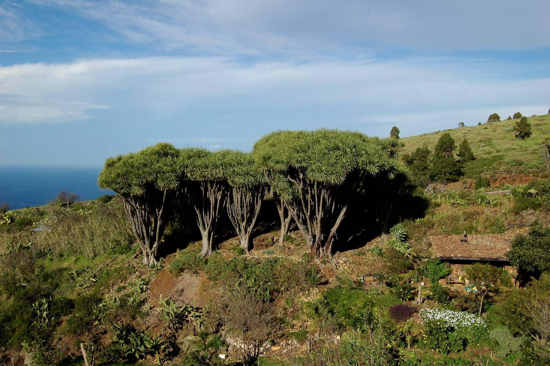 Besuchen Sie La Palma - Tricias - Buracas (Teil von Schritt 4 von GR 130)