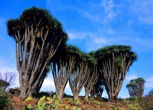 Visit La Palma: Buracas en La Palma