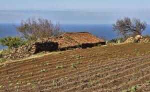 Visit La Palma: Paisajes con sabor en La Palma