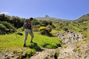 Visit La Palma: Refugio del Pilar – Mazo (PR LP 16) en La Palma