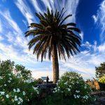 Cómo llegar | Visit La Palma