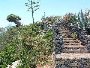 Visit La Palma: Mercadillo del Agricultor – Mirador de los Dragos (Puntagorda) en La Palma