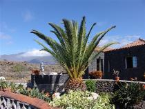 Visit La Palma - Casa Alberca