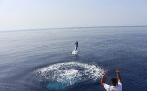 Visit LaPalma: Watch… cetaceans in La Palma